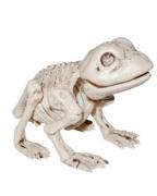 Skelett Kröte