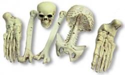 Kleiner Sack mit Skelettknochen 6-teilig