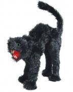 Bucklige Katze schwarz
