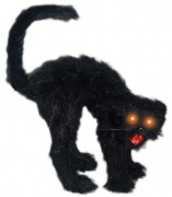 Bucklige schwarze Katze
