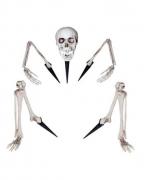 Skelett Knochenteile als Garten-Deko