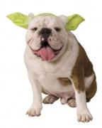 Hunde & Katzen Haarreif mit Yoda Ohren